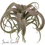 造花 インテリアティランジアおしゃれ 素材 パーツ 大量の1枚目の写真
