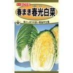 F1 春まき春光白菜 種子 たね 品番8368の1枚目の写真