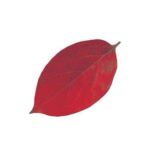 ヤマコー QKL2302 型抜きクリアシート 65369 柿の葉の1枚目の写真